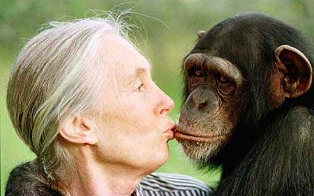 humano y chimpance, gran diferencia entre su ADN