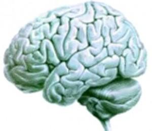 Cerebro de un ser vivo