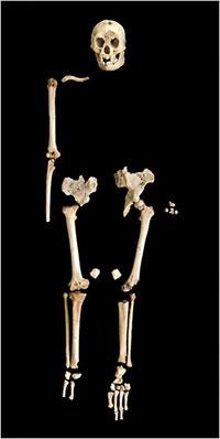 Esqueleto y Cráneo del Hobbit