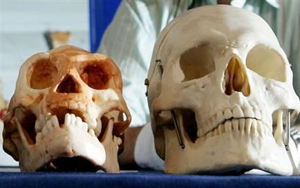 Cráneo de Hobbit y de Humano