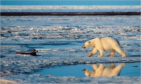 USA frena el uso del Acta de Animales en Peligro de Extincion