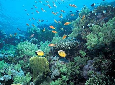 En esta imagen podemos apreciar la biodiversidad marítima