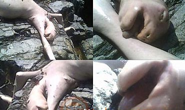 imágenes de la criatura encontrada en Panamá