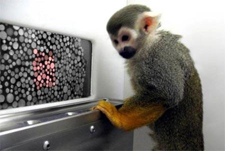 Dalton el mono ardilla utilizado en la investigacion
