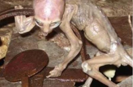 Fotografía de un extraterrestre que parece gato