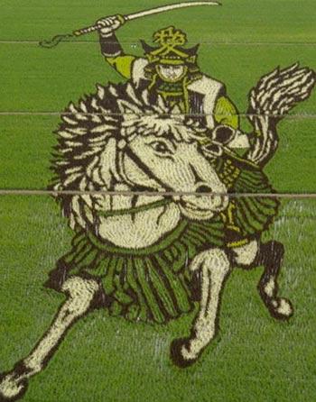 Imagen de un Guerrero Sengoku montado a caballo, creada con cientos de plantas de arroz