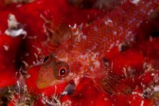 Fotografía de una especie marina desconocida