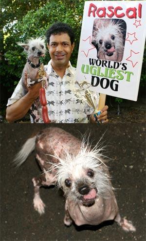 Rascal el perro mas feo del mundo