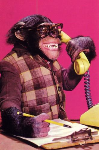 porque los chimpancés no pueden hablar