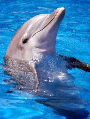 Delfin sobre el agua
