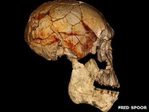 Nueva especie de humano en África