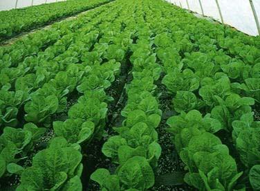 Estudio encuentra que alimento orgánico no es más nutritivo que alimento convencional