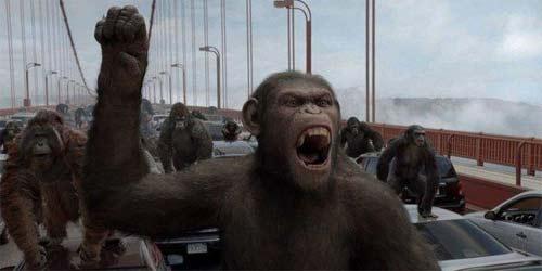 Crisis de la mediana edad en simios