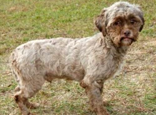 Perro Tonik con rostro de persona o semblante de humano