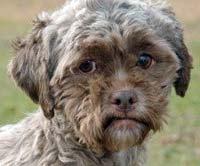 Tonik, el cachorro con rostro humano que parece estar triste