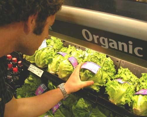 Comida Organica Fotos