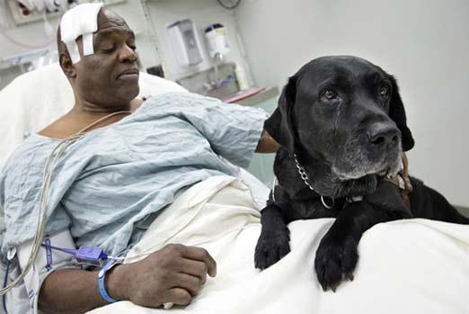 Cecil Williams y Orlando, su perro guía, en el hospital