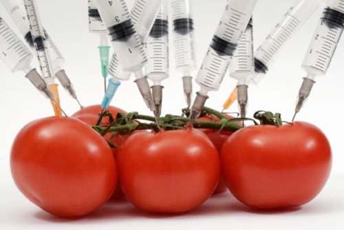 Monsanto Alimentos