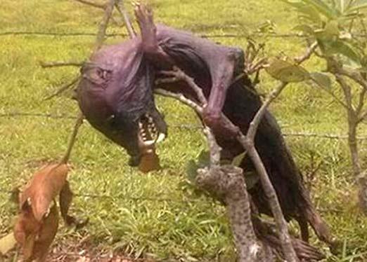 Nahual cazado en Veracruz con aspecto terrorífico