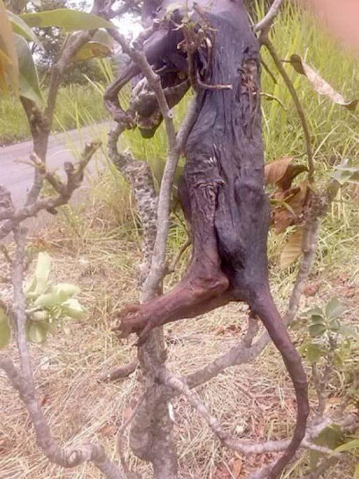 Nahual asesinado por cazadores de Veracruz