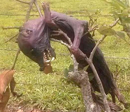 Nahual Real o criatura extraña
