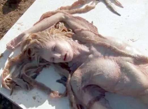 Imagen de Sirena acostada muerta
