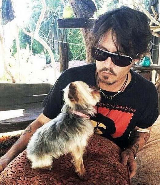 Johnny Depp con uno de sus Yorkshire Terrier sus amados perritos