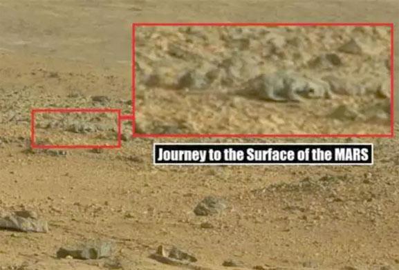 Un lagarto en Marte, una foto que intriga a todo el mundo